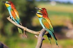 三只异乎寻常的鸟坐分支 免版税库存照片