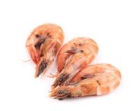 三只新鲜的煮沸的虾。 免版税库存照片