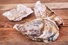 三只新鲜的牡蛎 库存图片