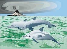 三只海豚在海 免版税图库摄影