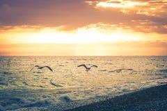 三只海鸥沿海滩的海岸线在美好的日落的背景的飞行 被定调子的图象 免版税库存图片