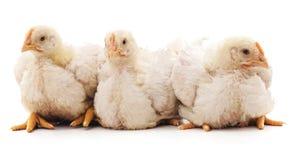 三只火鸡 免版税库存图片