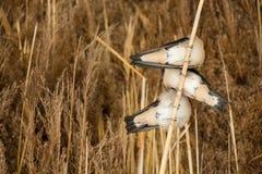 三只燕子坐一张底视图的分支 免版税图库摄影
