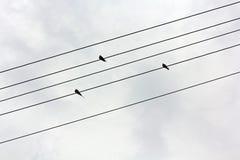 三只燕子坐导线 免版税库存照片
