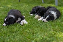 三只狗小狗谎言在草甸 库存照片
