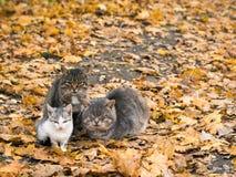 三只猫在秋天公园互相保留温暖 库存图片