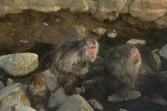 三只猴子等待的食物 免版税库存图片