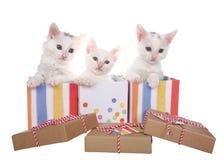 三只白色小猫流行在五颜六色的当前箱子外面 库存图片