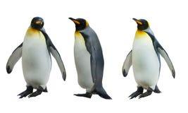 三只皇家企鹅 库存图片