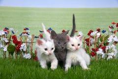 三只蓬松小猫在花园里 免版税库存图片