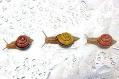 三只蜗牛连续 免版税库存照片