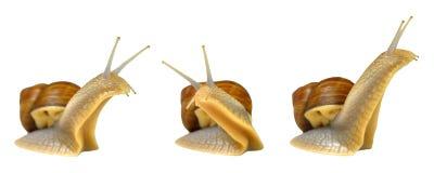 三只蜗牛 库存照片