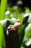 三只蜗牛 库存图片