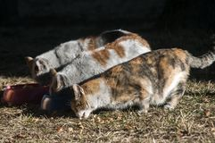 三只街道猫 免版税库存图片