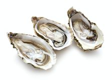 三只被打开的牡蛎 免版税库存图片