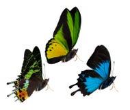 三只被隔绝的蝴蝶侧视图  免版税图库摄影