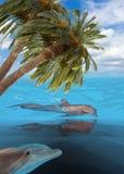 三只跳跃的海豚 免版税库存照片