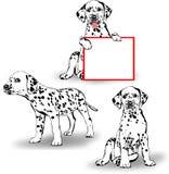 三只达尔马提亚狗 免版税图库摄影