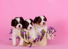 三只逗人喜爱的小狗在花篮子坐 与一个红色头的Fahlen在桃红色背景 免版税库存照片