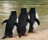 三只通心面企鹅 库存照片