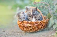 三只镶边小猫 三小的逗人喜爱的小猫 库存照片