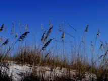 三只风筝和沙丘 免版税库存照片