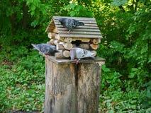 三只鸟检查他们的房子 库存图片