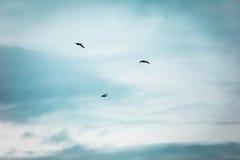三只鸟飞行在多云天空下 库存照片