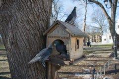 三只鸠坐鸟饲槽在冬天期间在公园晒干 库存图片