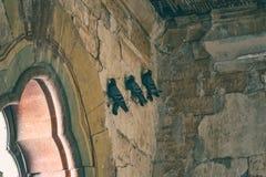 三只鸽子休息 库存图片