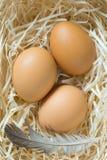 三只黄色鸡蛋和鸡在巢用羽毛装饰 免版税库存图片