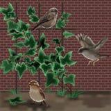 三只麻雀和一棵常春藤在砖墙后 免版税库存图片