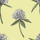 三叶草叶子和花手拉的无缝的样式图表例证 日愉快的patricks圣徒 免版税图库摄影