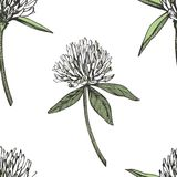 三叶草叶子和花手拉的无缝的样式图表例证 日愉快的patricks圣徒 免版税库存照片