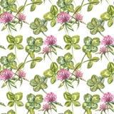 三叶草叶子和花手拉的无缝的样式水彩例证 日愉快的patricks圣徒 免版税库存照片