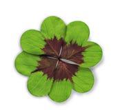 三叶草四重点有叶的形状 库存图片