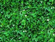 三叶草顶视图自然无缝的背景  库存照片