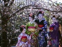 三名美丽的妇女和一个美妙的小女孩Maiko和服的穿戴 库存照片