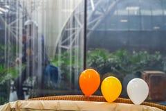 三在玻璃前面的气球与后边玻璃清洁剂 库存照片