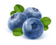 三在白色背景和叶子隔绝的蓝莓 库存照片