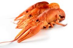 三在白色背景的开胃煮沸的龙虾 库存照片