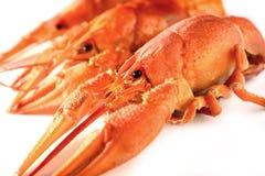 三在白色背景的开胃煮沸的龙虾 库存图片
