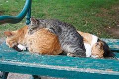 三在长凳的睡觉猫 户外 库存照片