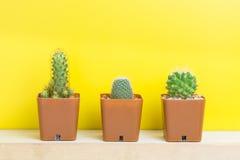 三在黄色背景的盆的仙人掌 库存图片