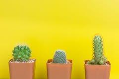 三在黄色背景的盆的仙人掌 免版税库存照片