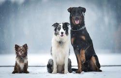三坐在冬天公园的狗 库存图片