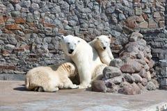 三头北极熊在动物园里 库存照片