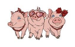 三头快乐的典雅的猪fashionista 库存图片