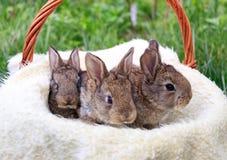 三小和美丽的兔宝宝 免版税库存照片