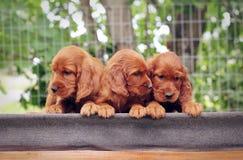 三小小狗安装员 免版税库存图片